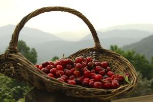 cherries 004